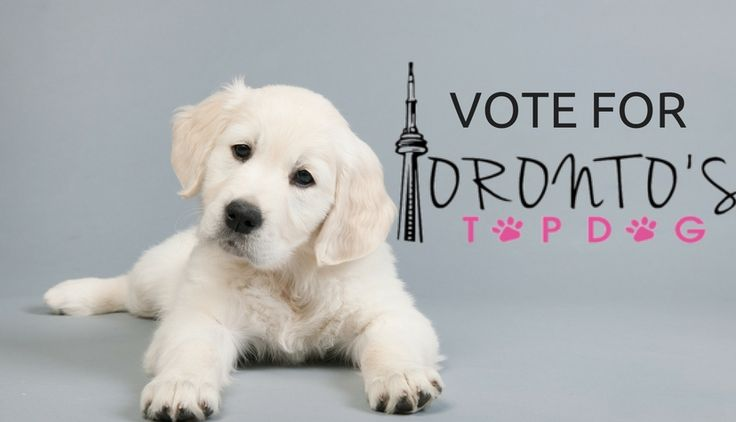 VOTE FOR ME TO BE TORONTO'S TOP DOG!!!  The voting is now OPEN!! #oscarpawpi #toronto