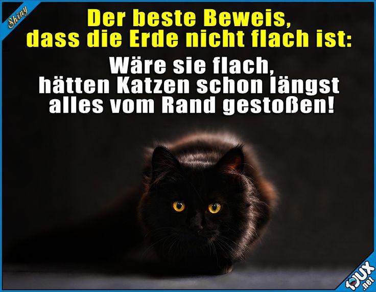 Der beste Beweis, dass die Erde nicht flach ist: Wäre sie flach, hätten Katzen schon längst alles vom Rand gestoßen!