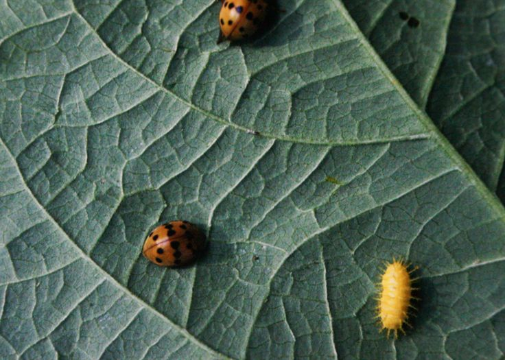 The way to Discourage Garden Pests