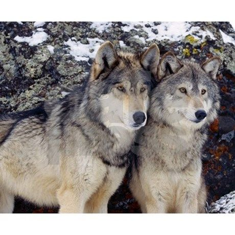 wolf couples - Saferbrowser Yahoo Image Search Results