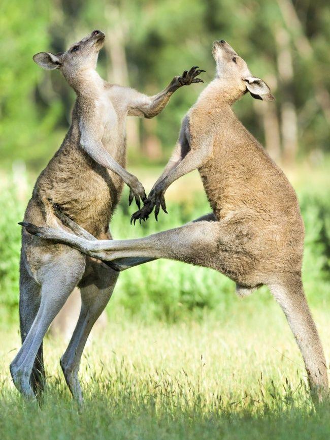 24 Fotos Que Muestran Que Australia No Es Solo Otro Pais Es Un Mundo Diferente In 2020 Australia Animals Animals Australia