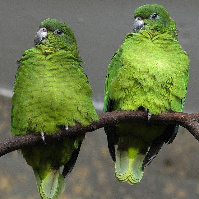 Parrot 105 105 best Dogs C...