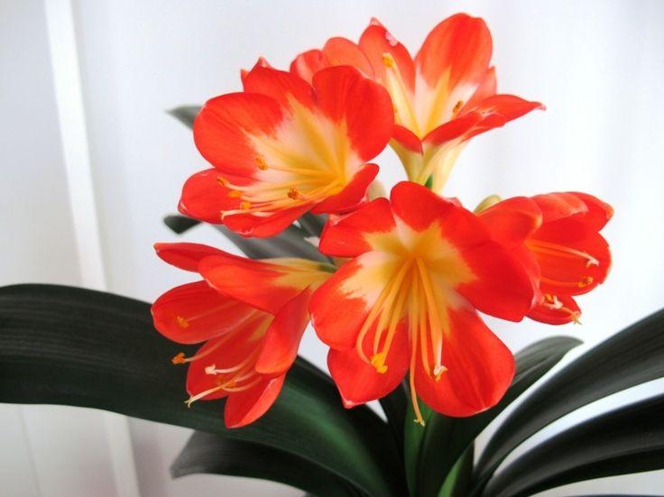 17 Best Ideas About Blühende Zimmerpflanzen On Pinterest ... Bluhende Zimmerpflanzen Arten