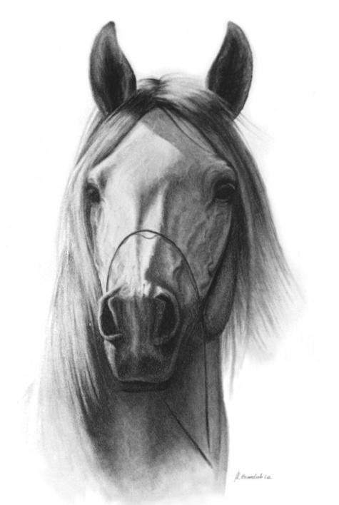 Cabeza de caballo | Caballos - Dibujos | Pinterest | Search
