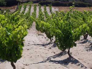 #calasetta #winery #sardinia #tasting