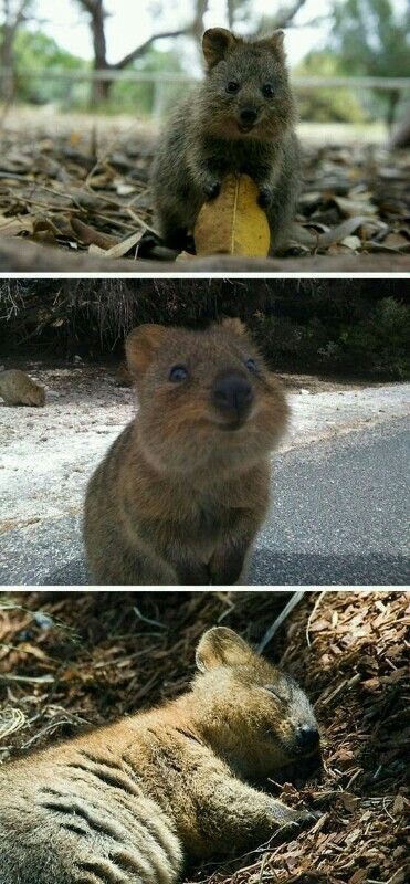 Happiest animal I have ever seen