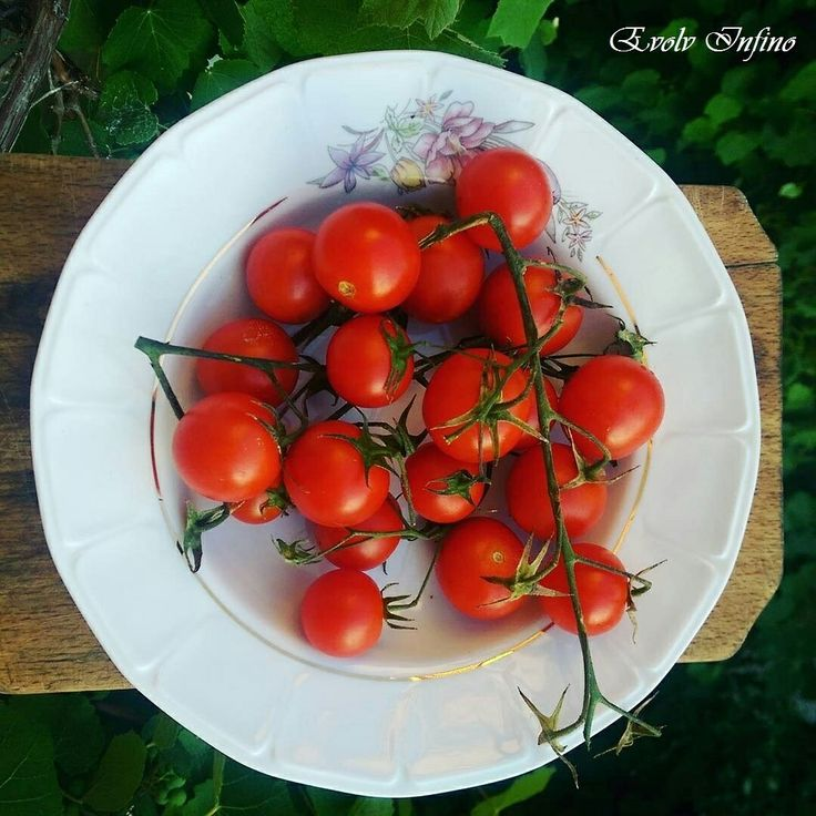 Tomatoes - Mono Meal  for a Clean Digestive Tract.