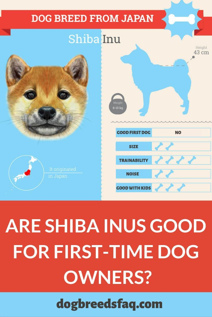 Choosing The Right Dog Leash For Your Dog Size And Type Dog