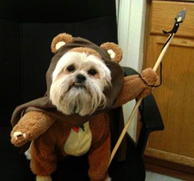 Halloween Costume Ideas For Pets