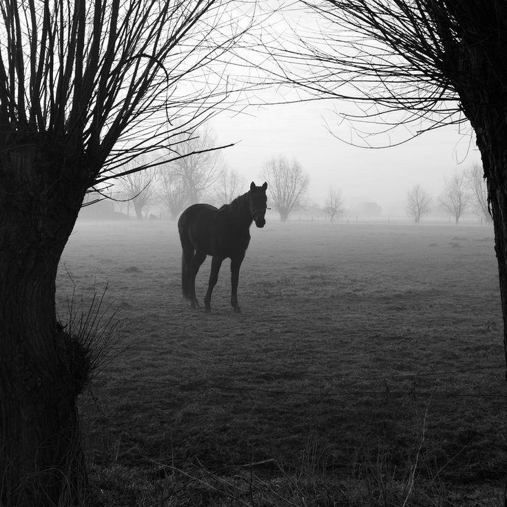 Curious Horse by marikoen