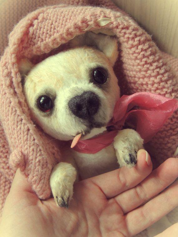 Chihuahua dog Sophia. Teddy hond. Toy Terriër. door katerinamakogon