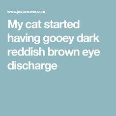 My cat started having gooey dark reddish brown eye discharge