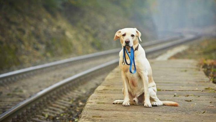 8 formas de ayudar a los perros abandonados