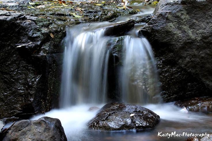 TOTAL OASIS || Curtis Falls, Tambourine Mtn QLD