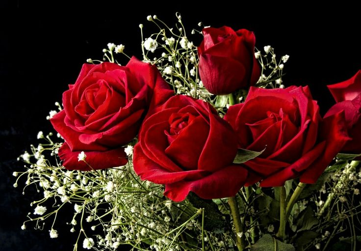 Beautiful red roses with white flowers