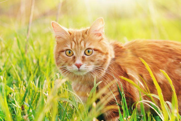 Ist meine Katze glücklich? | zooplus Katzenmagazin