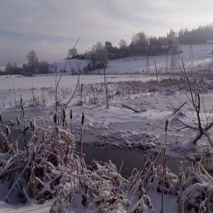 #winter #nature #snow #lake #zima #natura #śnieg #snieg #jezioro