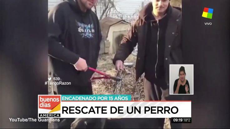 Rescataron a un perro que estuvo 15 años encadenado