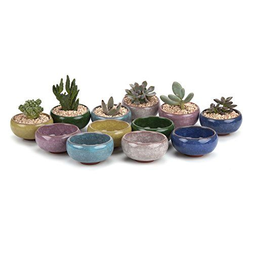 661 best house plants images on pinterest journals logs and blush inch ceramic ice crack zisha serial succulent plant pot cactus plant pot flower pot container planter full colors package 1 pack of 12 fandeluxe Gallery