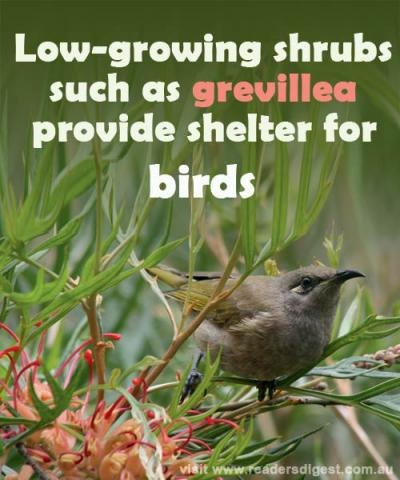 Grevilleas are great for attracting birds, so plant these or other low-growing shrubs if you want fauna in your backyard.