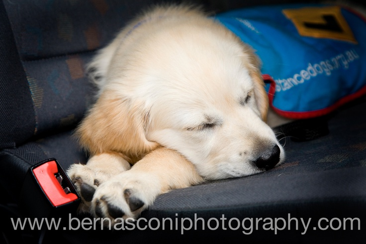 A big day for this pup... www.bernasconiphotography.com