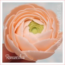Ranunculus: one of my 2 favourite flowers. this also needs to be a part of my wedding.