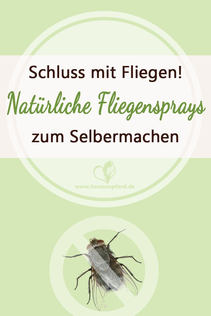 Endlich Schluss mit Fliegen – Warum Du keine chemischen Fliegensprays benutzen solltest und wie die bessere Alternative aussieht!