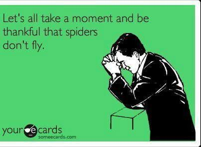 #terrifiedThank God, Vintage Chic, Fly Spiders, Lol So True, My Life, Funny Stuff, Feelings Free, True Stories, Thank You Jesus