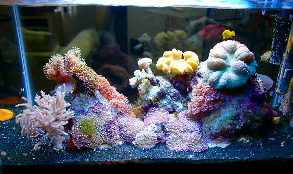 Black Sand Reef Tank Tank Set Ups Pinterest Sands
