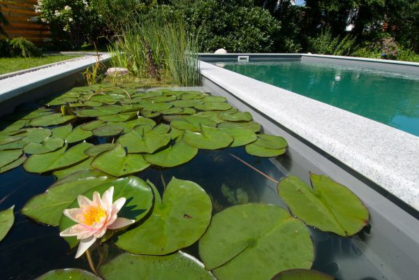 LOVE the idea of a sustainable pool & pond combo: Swim Ponds, Piscina Natural, Natural Swim Pools, Piscina Ecologica, Natural Swimming Pools, Natural Pools, Backyard Pools, Pools Design, Pools Ideas