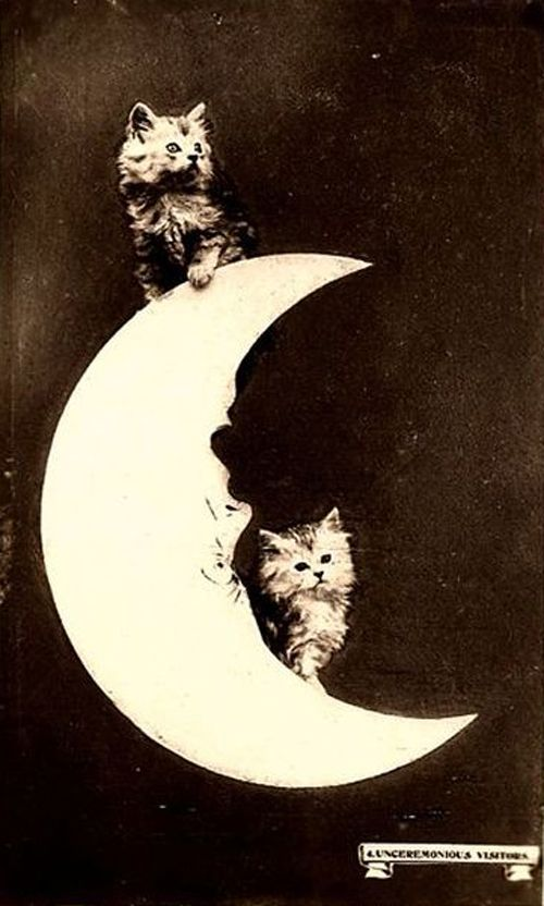 The kittens have turned the moon and the planets upside-down with cuteness!