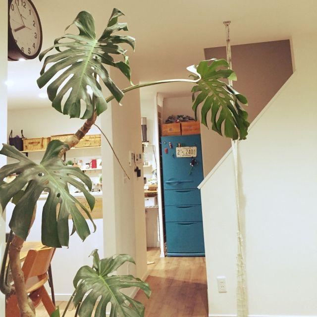 G.E.さんの、キッチン,観葉植物,壁掛け時計,DIY,モンステラ,黒板塗料,西海岸,冷蔵庫リメイク,ピーコックブルー,のお部屋写真