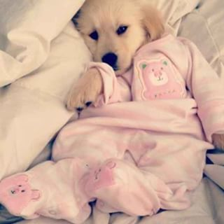 Community Post: 12 Puppies In Pajamas That Will Brighten Your Day