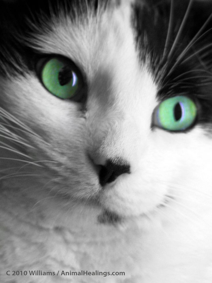 I've communicated with all types of cats, you can learn more about that at http://animalhealings.com/cat-behavior.html