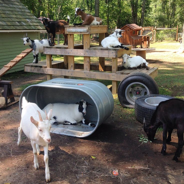 778 Best Goat Farm Images On Pinterest: 25+ Best Ideas About Goat Shelter On Pinterest