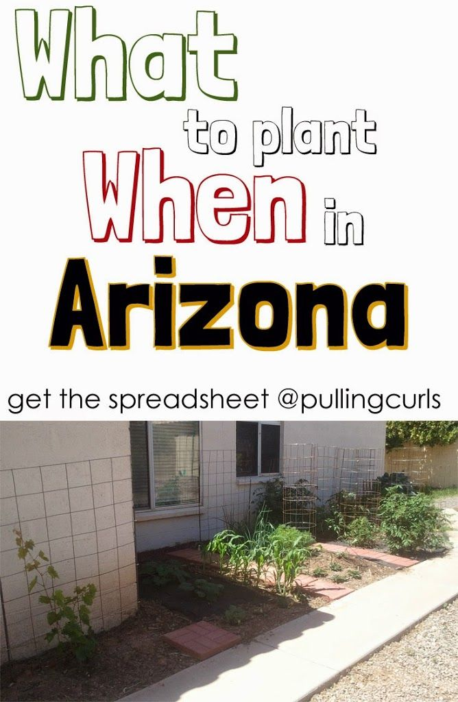 An Arizona planting guide.  Things are different in the dessert -- print out what to plant when!