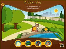 Food chains: what is a food chain? (F-2). Students explore how plants and animals get the energy to live. Students are able to create simple food chains that show the flow of energy from the sun to plants and on to animals.