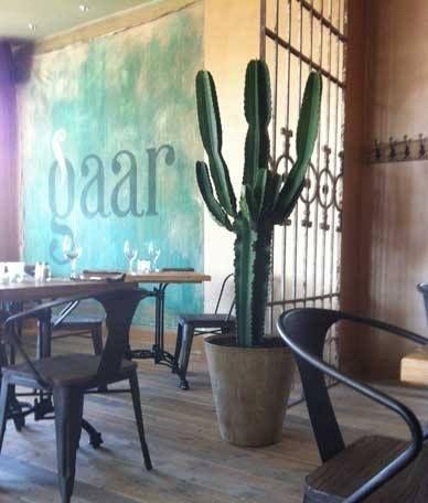 Grote cactus | Stijlvol én gemakkelijk | Chicplants