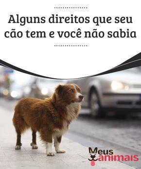 Alguns direitos que seu cão tem e você não sabia Em matéria de direitos animais, grandes avanços têm acontecido, em especial porque a maioria dos países já os incluem em suas legislações.