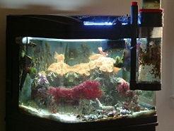 Reduce Saltwater Reef Aquarium Maintenance