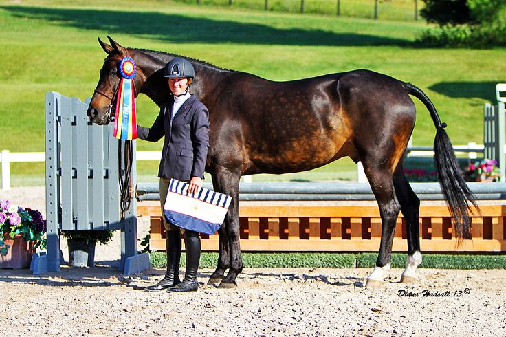 HannoverImports - Hanoverian and warmblood Hunter Jumpers, Jumpers and Hunter Jumper prospects for sale, imported