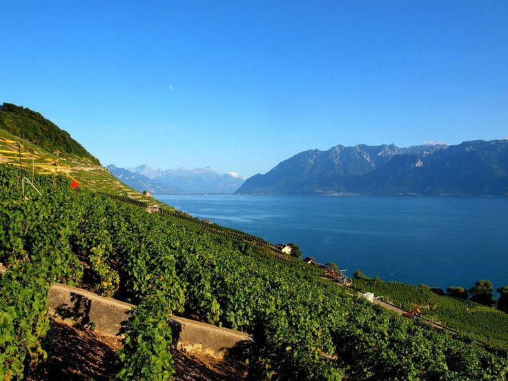 Lodowiec Aletsch, winnice Lavaux i Wallis w Szwajcarii - Podróże
