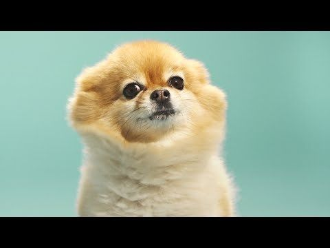 Two Guys One Pup | SUCH FASHION - YouTube