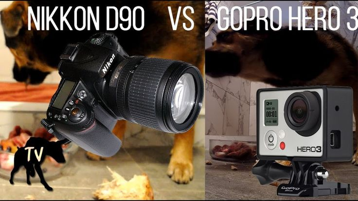 Nikkon D90 vs GoPro Hero 3 | Raw Feeding German Shepherd Mix