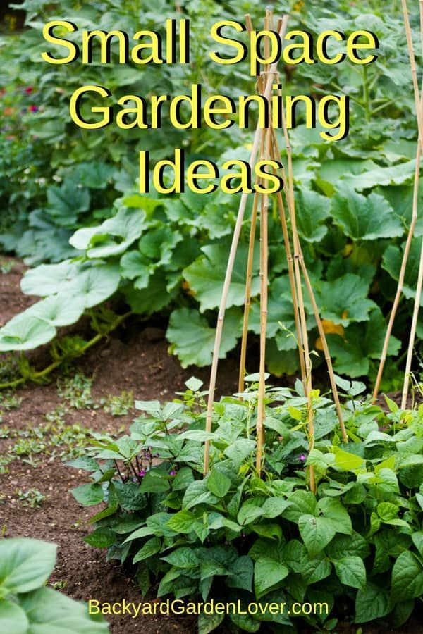 Small Space Gardening Ideas You Can Use Now Small Space