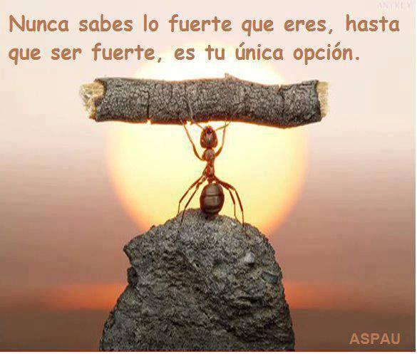 Fuerza!! #entretodospodemos