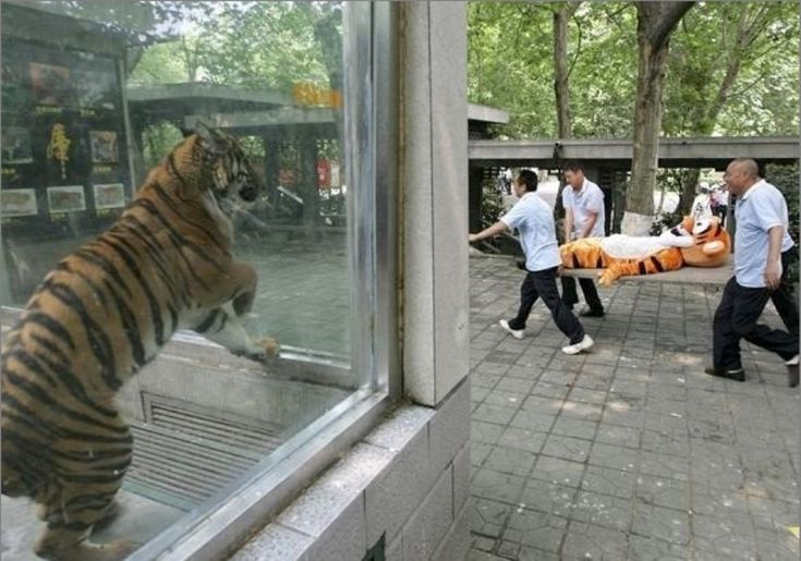 best-zoo-photo-ever