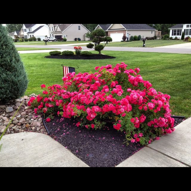 Roses In Garden: 1000+ Images About Landscaping The Yard And Lake Edge On