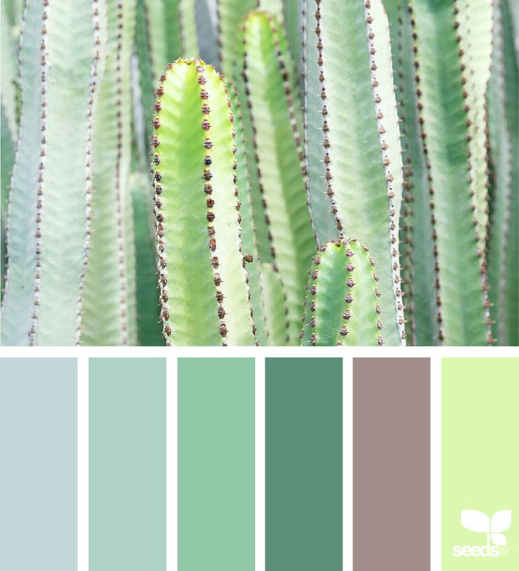 { succulent hues } - https://www.design-seeds.com/in-nature/succulents/succulent-hues-36