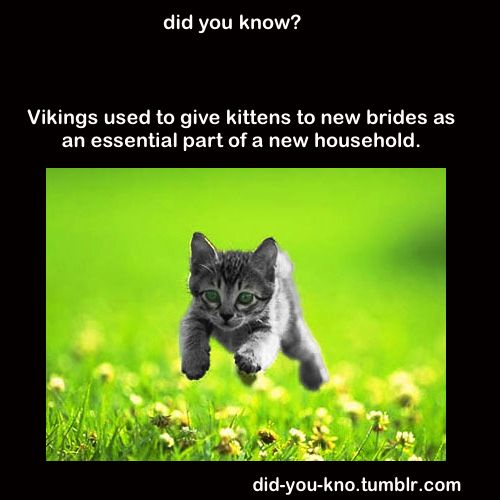Viking traditions and kittens. Beautiful combination. (I knew I liked the Vikings)